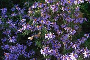 Wildflowers brighten the Tankwa landsacpe