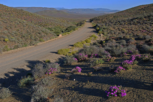 The R355 winds through the hills between Loeriesfontein and Calvinia