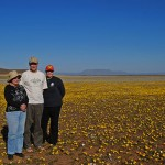 Spring rains dust the Tankwa Plains in a mantle of yellow