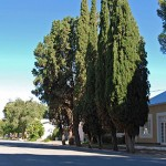 Tree-lined Carnarvon Street leads to the Village Square