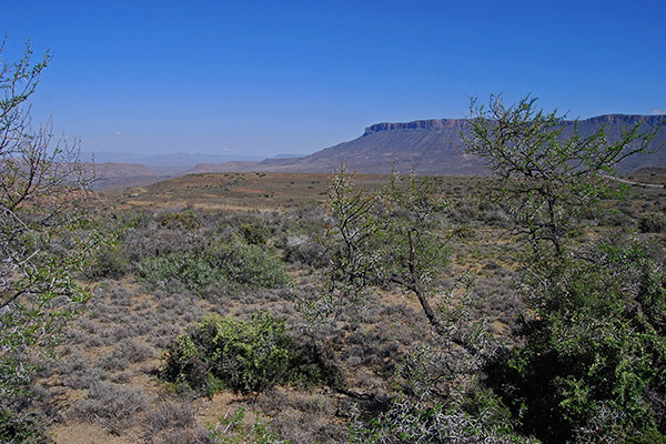 The wide open space of the Karoo National Park