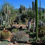 Obesa Cacti Nursery in Graaff-Reinet